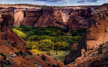 деревья, скалы, природа, каньон, сша, ущелье, аризона, каньон-де-шей