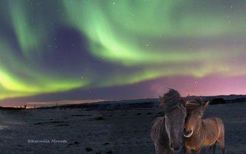 природа, северное сияние, лошади, исландские лошади