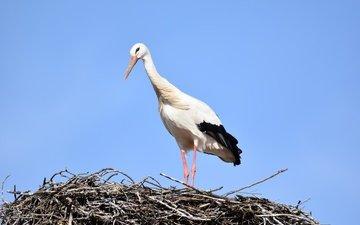 the sky, bird, stork, socket