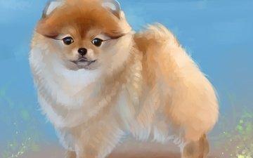 арт, рисунок, собака, шпиц