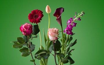 цветы, роза, лепестки, букет, тюльпан, стебель, гербера