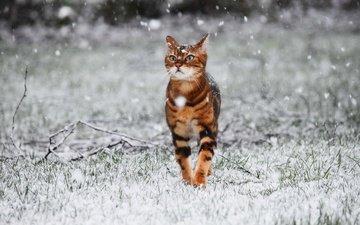 snow, winter, cat, walk