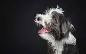 dog, black background, each, language