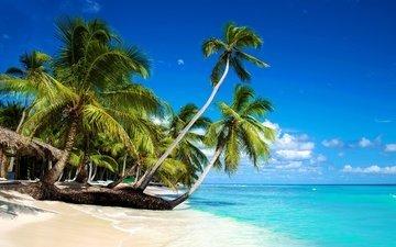 солнце, берег, море, песок, пляж, пальмы, отдых
