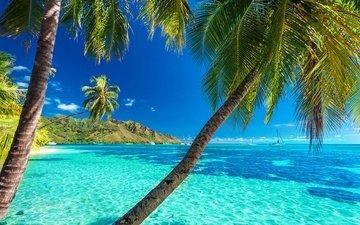 солнце, берег, пейзаж, море, пляж, пальмы, отдых, тропики