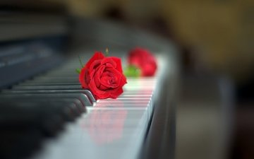 flowers, style, rose, piano, keys, red rose