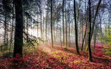свет, деревья, лес, листья, лучи, осен