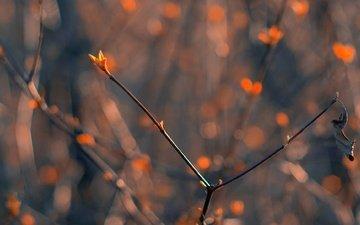 свет, природа, макро, фон, ветки, боке