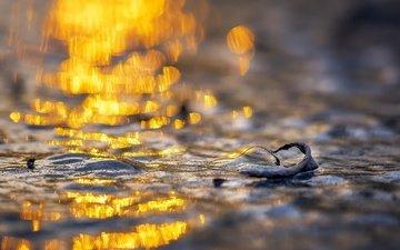свет, вода, природа, макро, фон, лёд, блики, пух