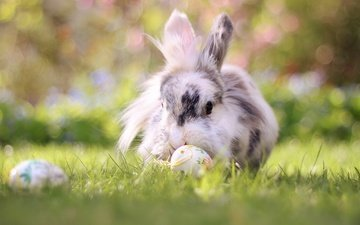 трава, природа, кролик, животное, пасха, яйца