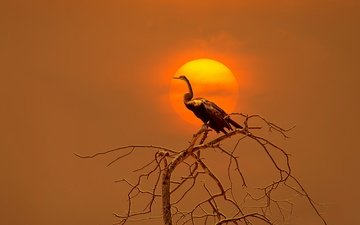 branch, the sun, tree, sunset, bird