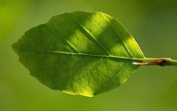 природа, зелёный, макро, фон, лист