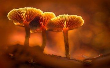 свет, грибы, гриб, оранжевый, подсветка, sophiaspurgin