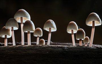 лес, макро, осень, грибы, sophiaspurgin