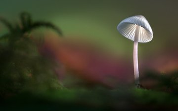 свет, лес, осень, гриб, шляпка, sophiaspurgin