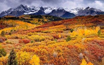 трава, деревья, горы, листва, осень