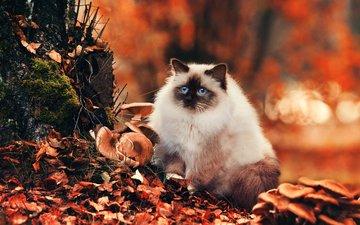 глаза, лес, кот, мордочка, усы, листва, кошка, взгляд, осень, грибы