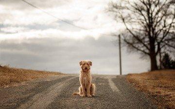 дорога, собака, ожидание
