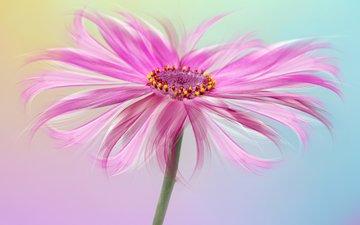 цвета, макро, цветок, лепестки, розовый, sophiaspurgin