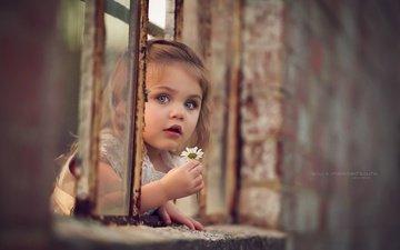 eyes, flower, look, children, daisy, girl, hair, face, window
