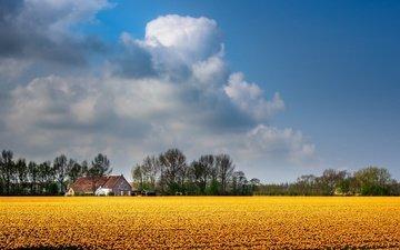 небо, цветы, облака, деревья, поле, дом