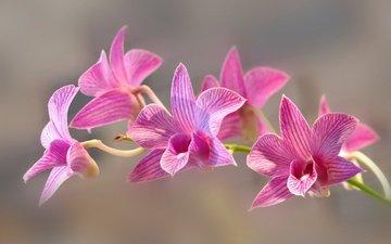 цветы, природа, лепестки, экзотика, орхидея, соцветие