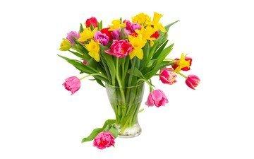 цветы, вода, разноцветные, красные, тюльпаны, розовые, белый фон, ваза, нарциссы, желтые, фиолетовые