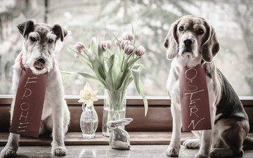 цветы, животные, пара, тюльпаны, окно, ваза, пасха, нарцисс, собаки, заяц, фигурка, бигль, фоксхаунд