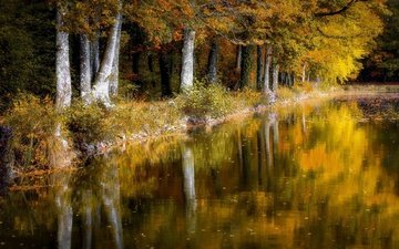 деревья, отражение, листва, осень, пруд