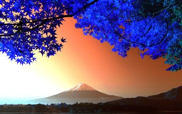 дерево, листья, гора, япония, вулкан, фудзияма