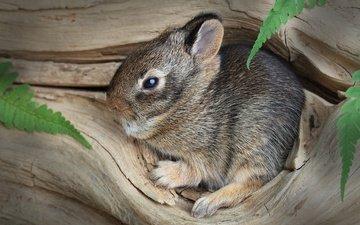 дерево, кролик, животное, малыш, заяц, зайчонок