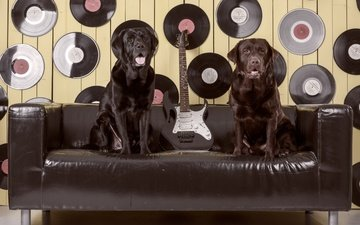 guitar, sofa, labrador, dogs, records, retriever