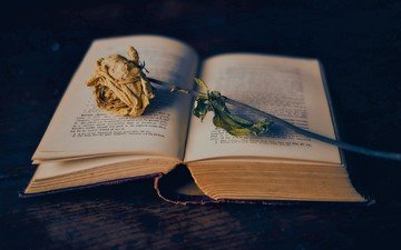 background, flower, rose, book, page