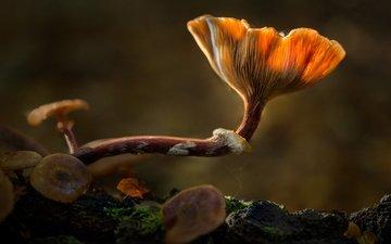 свет, лес, грибы, sophiaspurgin, лесные грибы