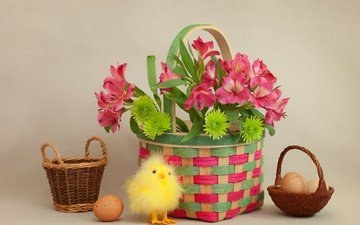flowers, basket, easter, eggs, chicken