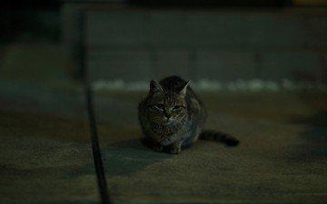 глаза, кот, усы, взгляд, серый, грустный