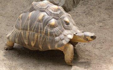 лапы, черепаха, панцирь, шея