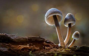 лес, осень, грибы, гриб, боке, sophiaspurgin
