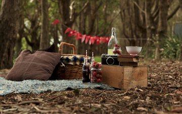 лес, ягода, клубника, книги, фотоаппарат, корзина, бутылки, пикник, кола, клубника. кола