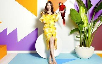 листья, платье, модель, птица, актриса, растение, фигура, попугай, фотосессия, шатенка, hailee steinfeld, хейли стайнфелд