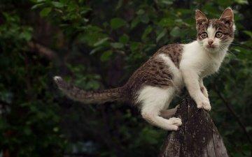 глаза, кот, листва, лето, кошка, взгляд, котенок, удивление, алексей яшкин