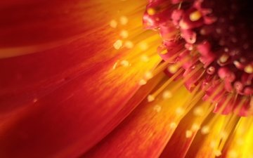 макро, цветок, лепестки