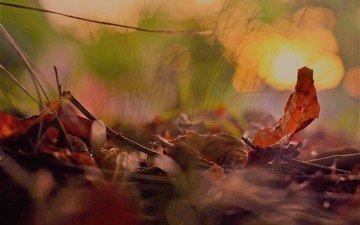 природа, листья, макро, фон, листва, осень, блики