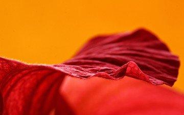 макро, фон, цветок, красный, лепесток