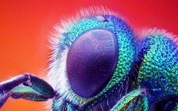 макро, насекомое, глаз, муха