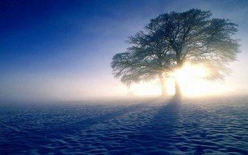 небо, свет, деревья, солнце, снег, природа, поле, тени