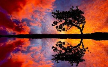 небо, вода, природа, дерево, закат, отражение