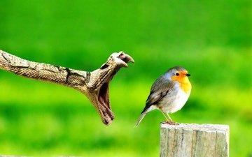 обед, природы, закон