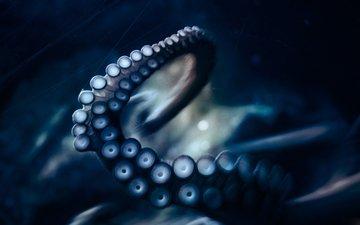 осьминог, под водой, щупальца, подводный мир, присоски