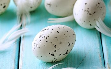 пятна, доски, перья, яйца, доск